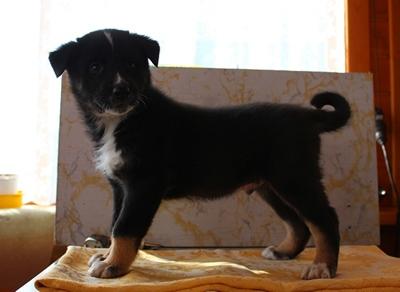 Ильчан, 1,5 месяца