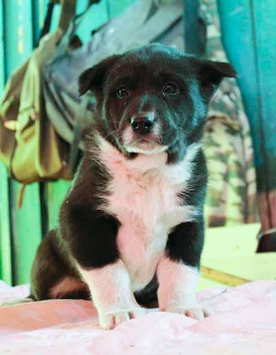 Могол, 1,5 месяца
