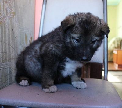 Викинг, 1,5 месяца