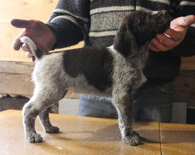 Альба, 1,5 месяца