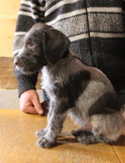 Абигал, 1,5 месяца